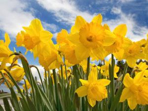 Võtame koos kevadet vastu! @ Marsö, Horns udde